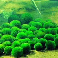 egrow 1000 unids hierba de cesped ornamental de tanque de peces de acuario