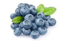 arandano azul de asturias formato kilo